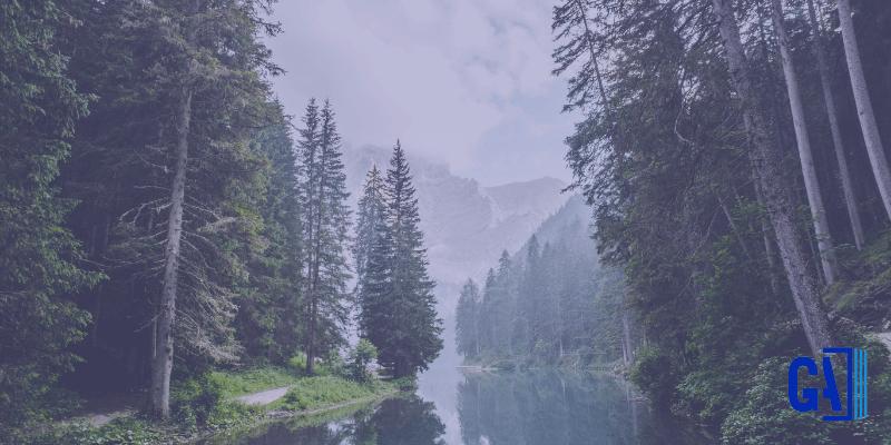 bosques sostenibles fsc