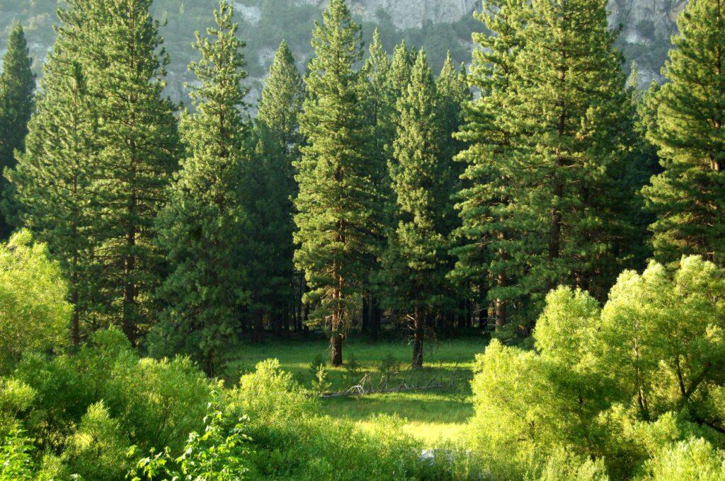 Bosques sostenibles, en grupo gomez aparicio apostamos por una gestión forestal responsable.